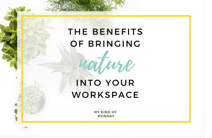 How natural elements can benefit your office environment